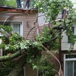 Emergency Removal of a large dead oak in toronto 10