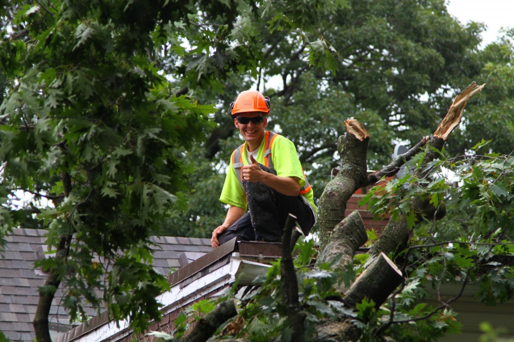 Tree Restoration By Professional Arborists- Tree Doctors