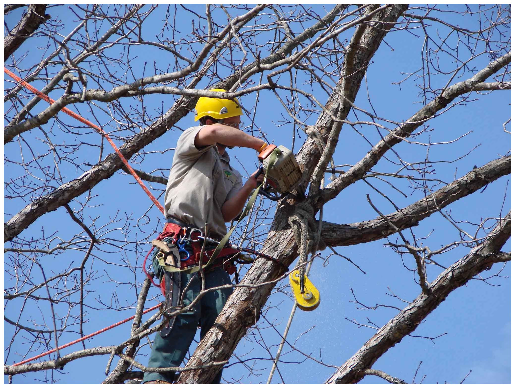 Fall Tree Pruning and Removals