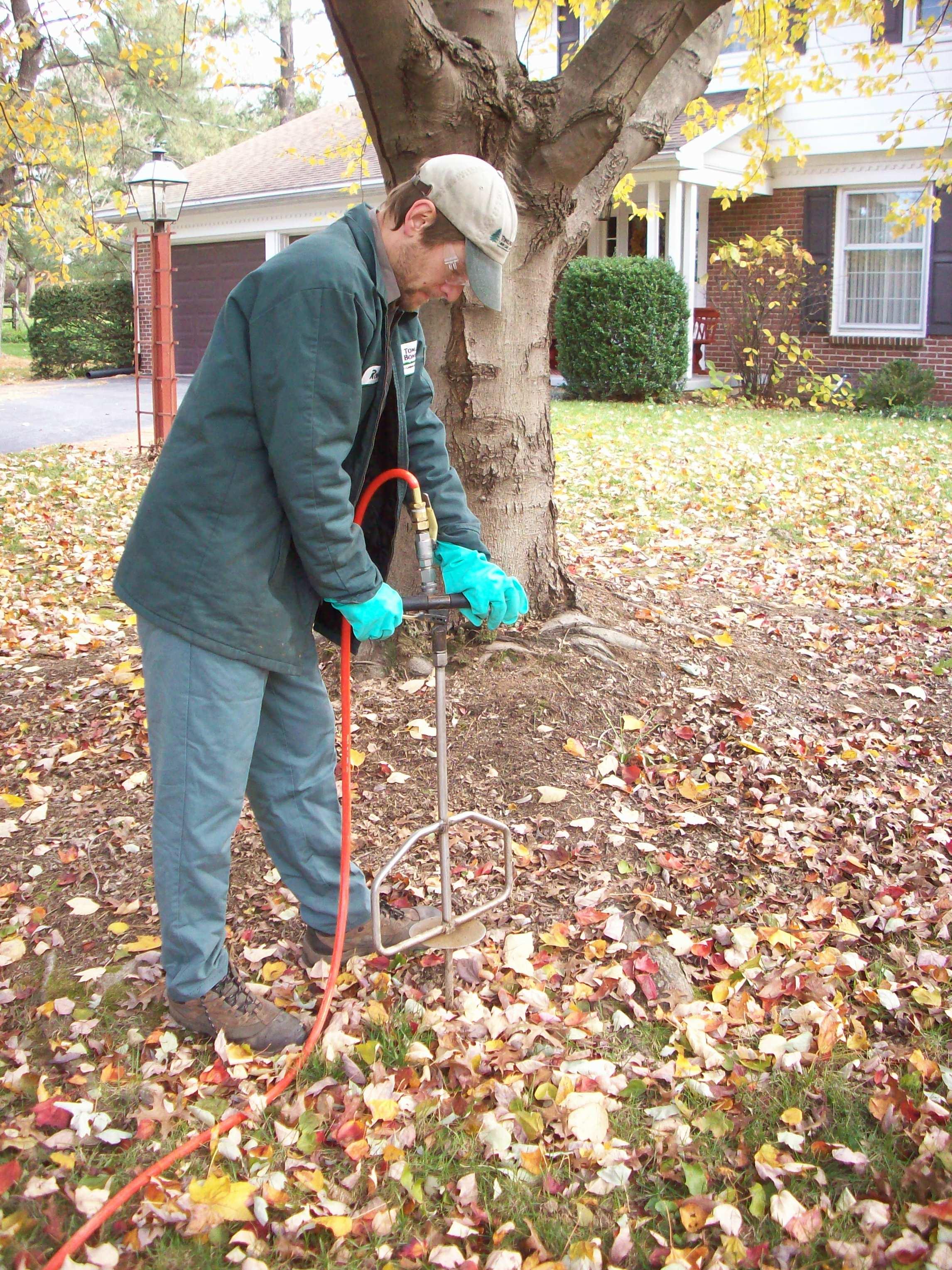 Fertilizing Trees in the Fall
