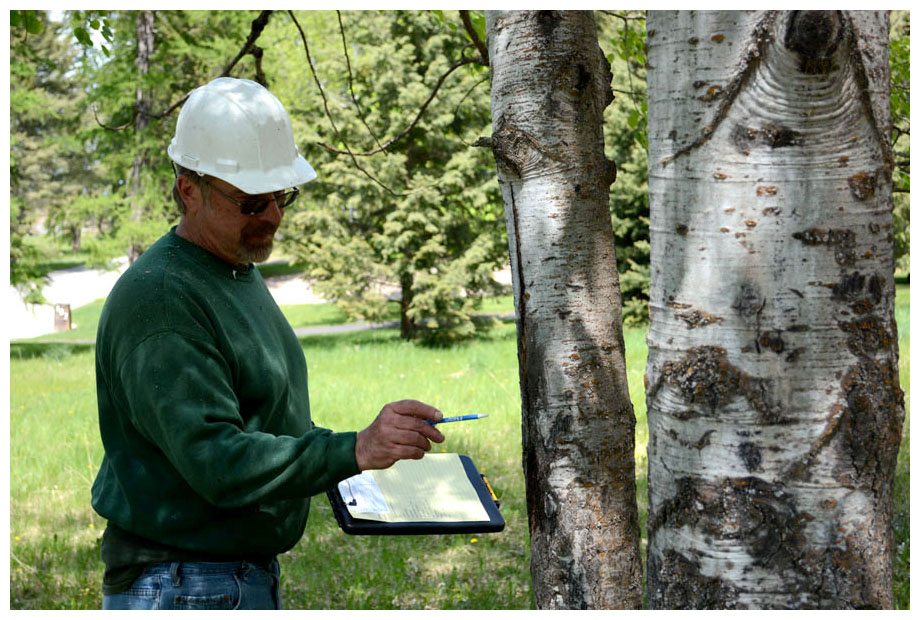 How Frequently Does Tree Risk Assessment Is Done