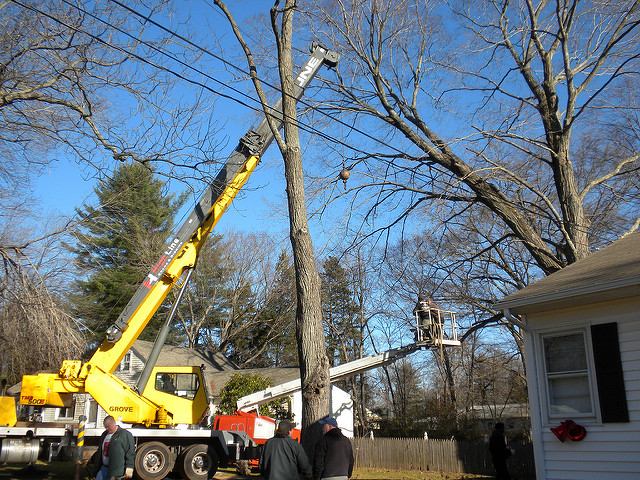 How to Prevent a Tree Removal