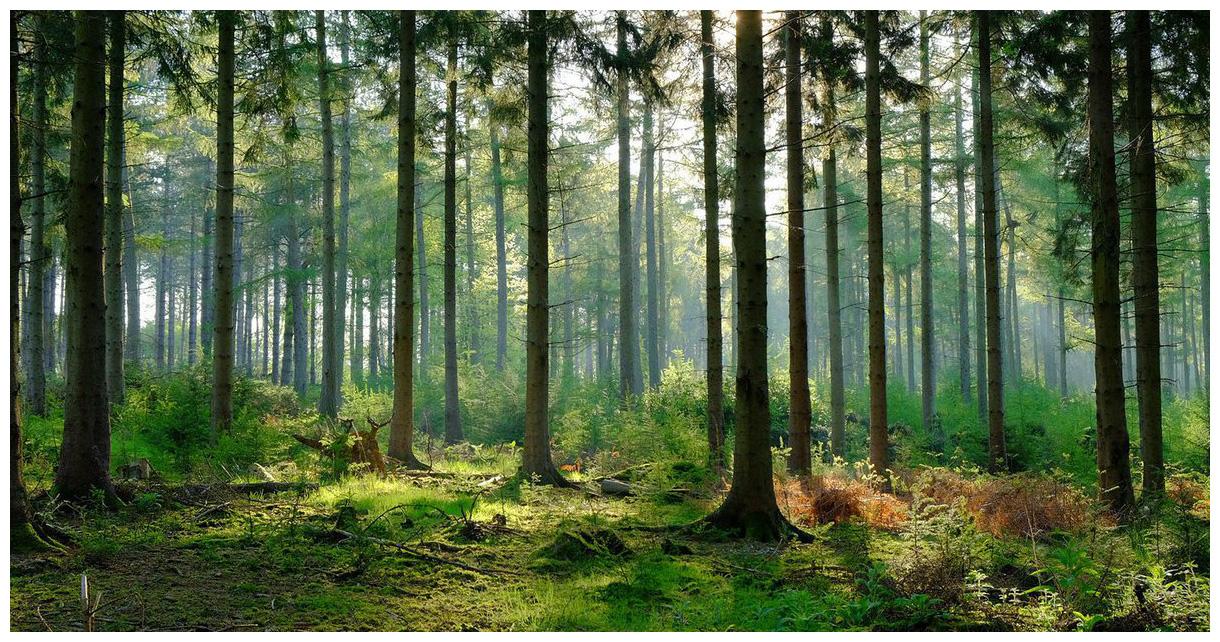 Managed Forest Tax Incentive Program (MFTIP)