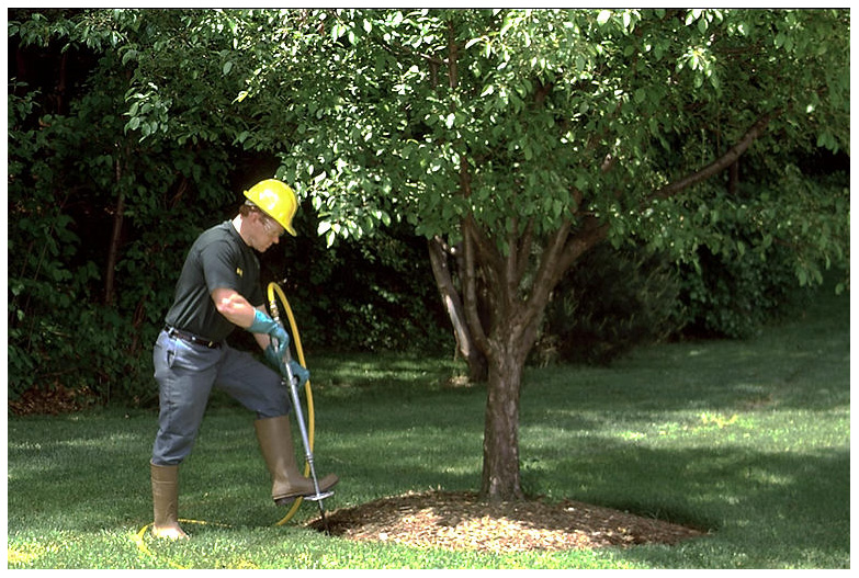 Our Tree Services in Mississauga