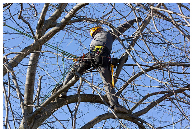 Pruning Needs to Be Done to Prepare Trees for Winter