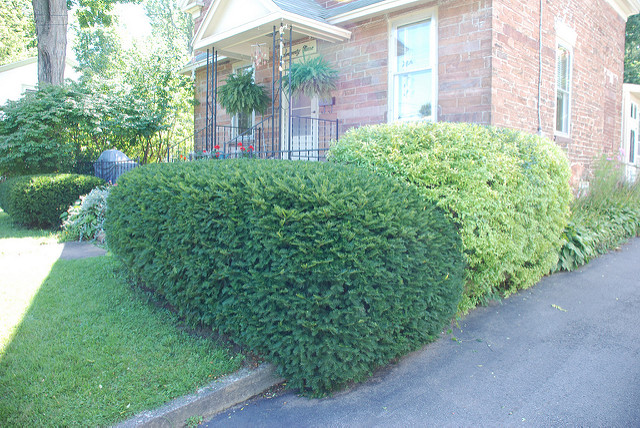 Shrub Trimming Services in Toronto
