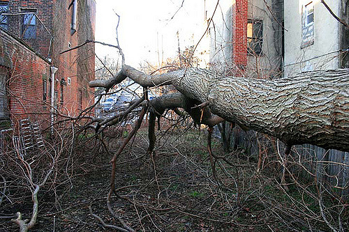 Take Advantage of Arborist Reports and Consulting Services in Toronto