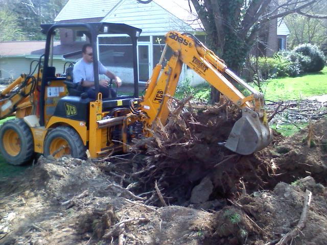 Things to Know about Tree Stump Removal