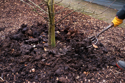 Tips for Applying Mulch