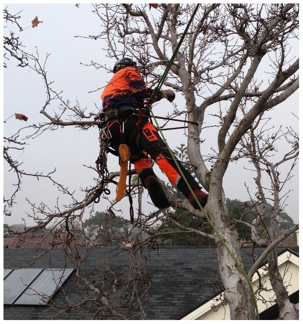 Tips for Fall Tree Pruning