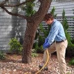 When You Need to Take Advantage of Deep Root Tree Fertilizing