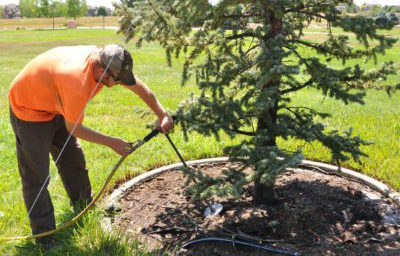 Top Benefits of Spring Root Tree Fertilizing