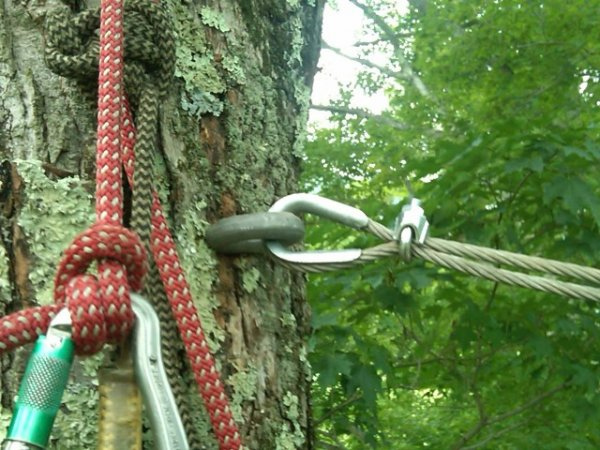 Top Benefits of Using Tree Cabling and Bracing Services