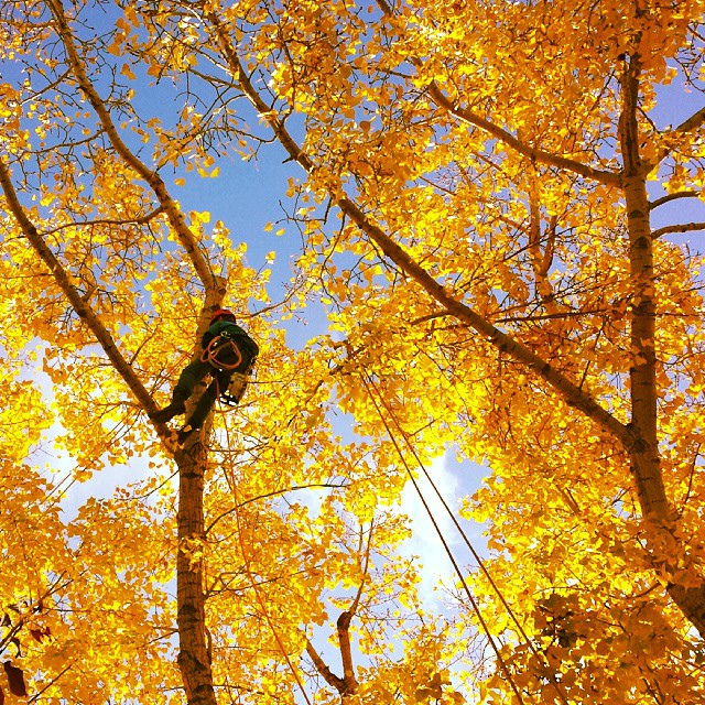 Top Reasons Why You Should Take Advantage of Fall Tree Pruning in Toronto
