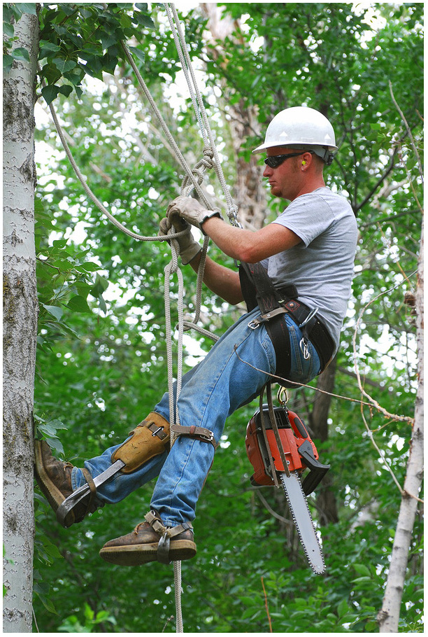 Benefits of Hiring Our Arborists for Tree Care in Brampton