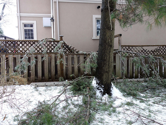 Tree Care Tips to Help You Prevent Storm Damage in Winter