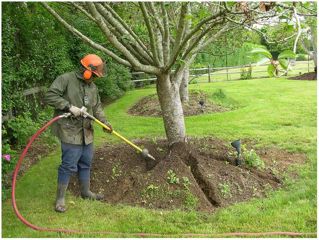Full Range of Tree Care Services in Brampton