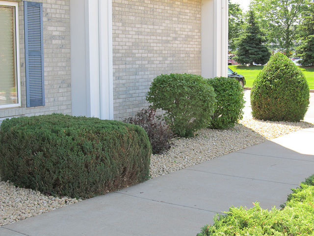 Tree Doctors Can Help You Keep Your Shrubs Beautiful and Healthy