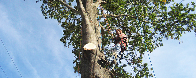 Tree Doctors Can Help You with Tree Removal