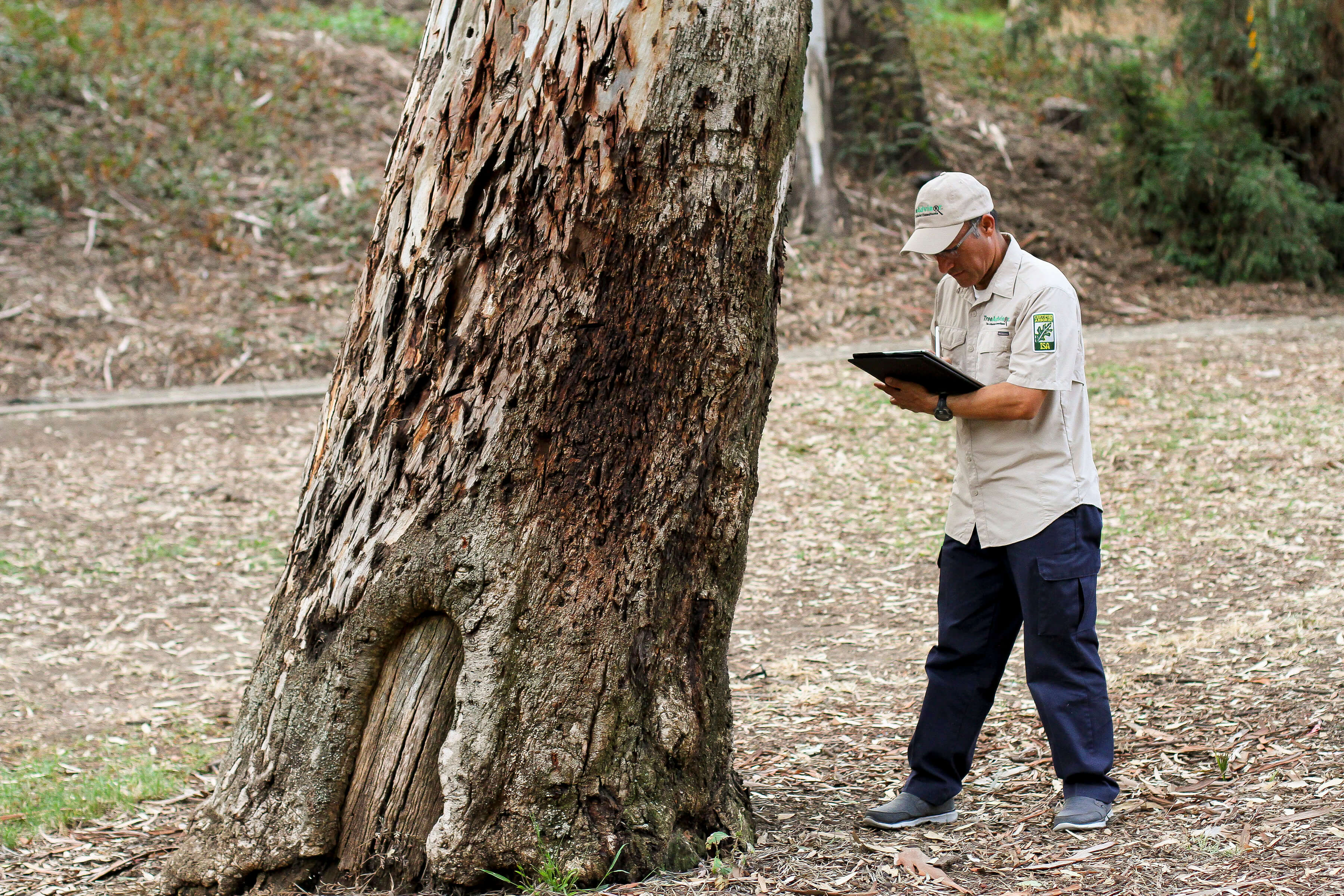 Tree Doctors Offers Arborist Reports and All Types of Arborist Services