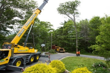 Tree Doctors Offers a Wide Range of Tree Services to Property Management Companies in Toronto
