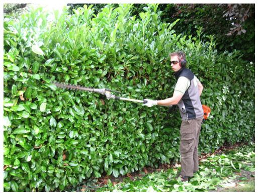 Tree Doctors Provide Hedge and Shrub Trimming Service in Toronto