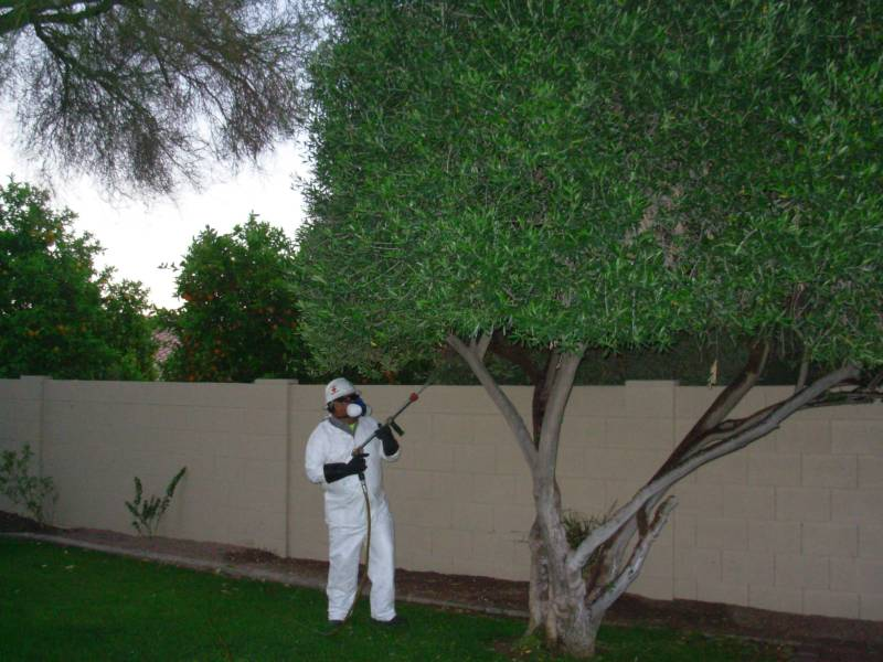 Tree Pest and Disease Control