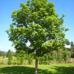 Tree Planting in Toronto