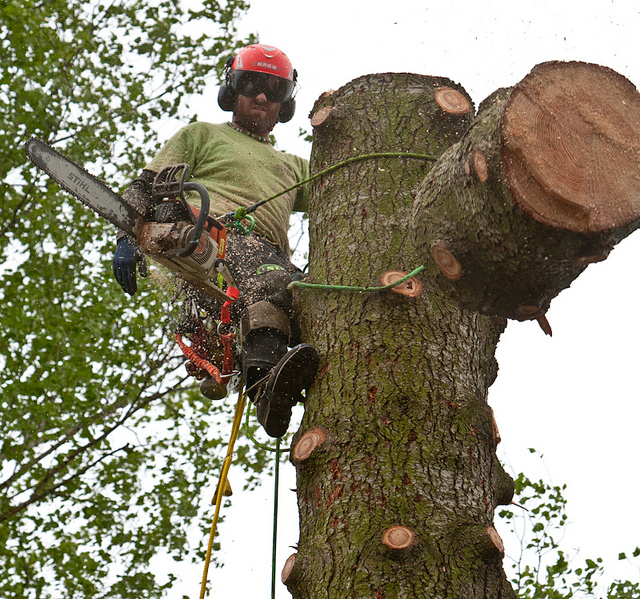 Tree Removal Procedure in the City of Toronto