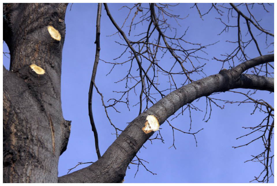 What Trees Can Benefit from Fall Tree Pruning