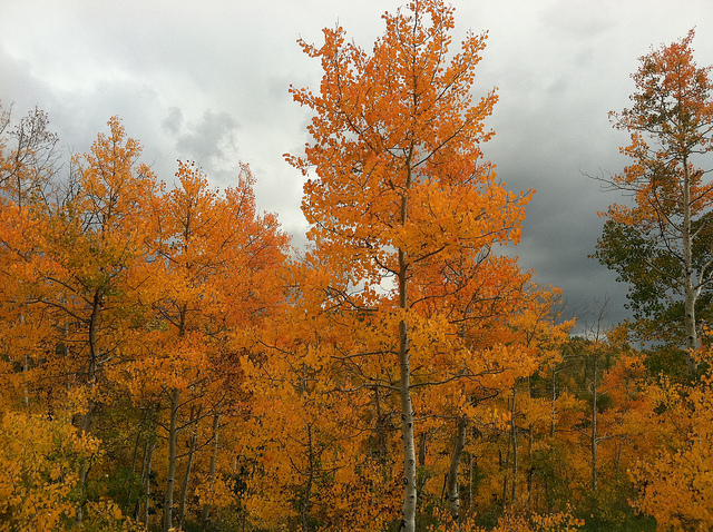 What is the Best Time for Deep Root Tree Fertilization in Fall