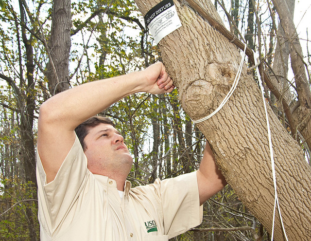 What to Do If You Think that Your Trees Have Been Infected with EAB