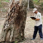 When Do You Need Arborist Reports and Consulting in Toronto