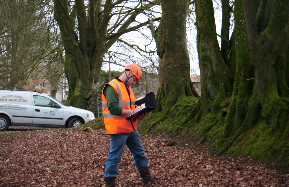 Where to Get Arborist Reports and Consulting in Toronto