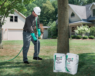 Why It's Best to Contact Us for Spring Root Tree Fertilizing in Toronto