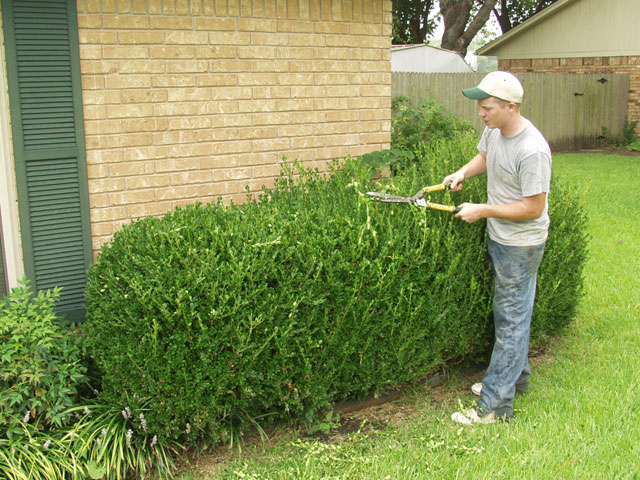 Why It's So Important to Trim Shrubs Regularly