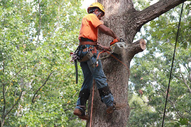 Why Toronto Property Owners Should Use Our Tree Services