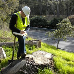 Why You Should Choose Us for Arborists Reports and Arborist Services