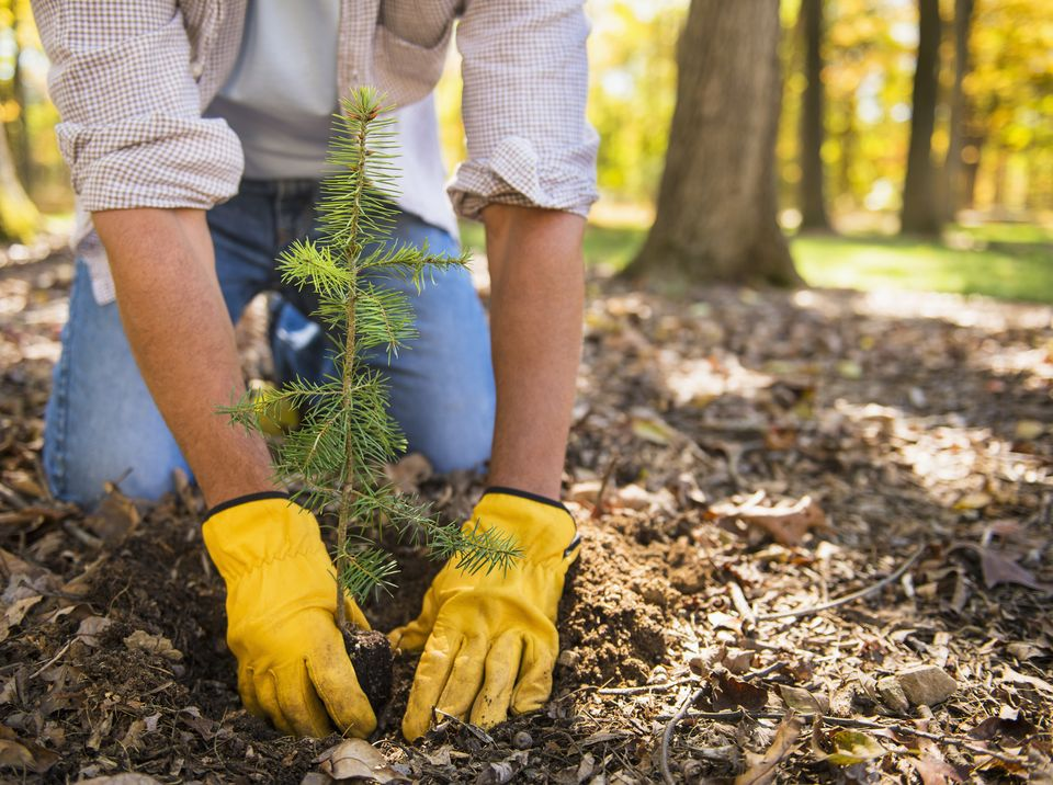 Why You Should Choose Us for Tree Planting in Toronto