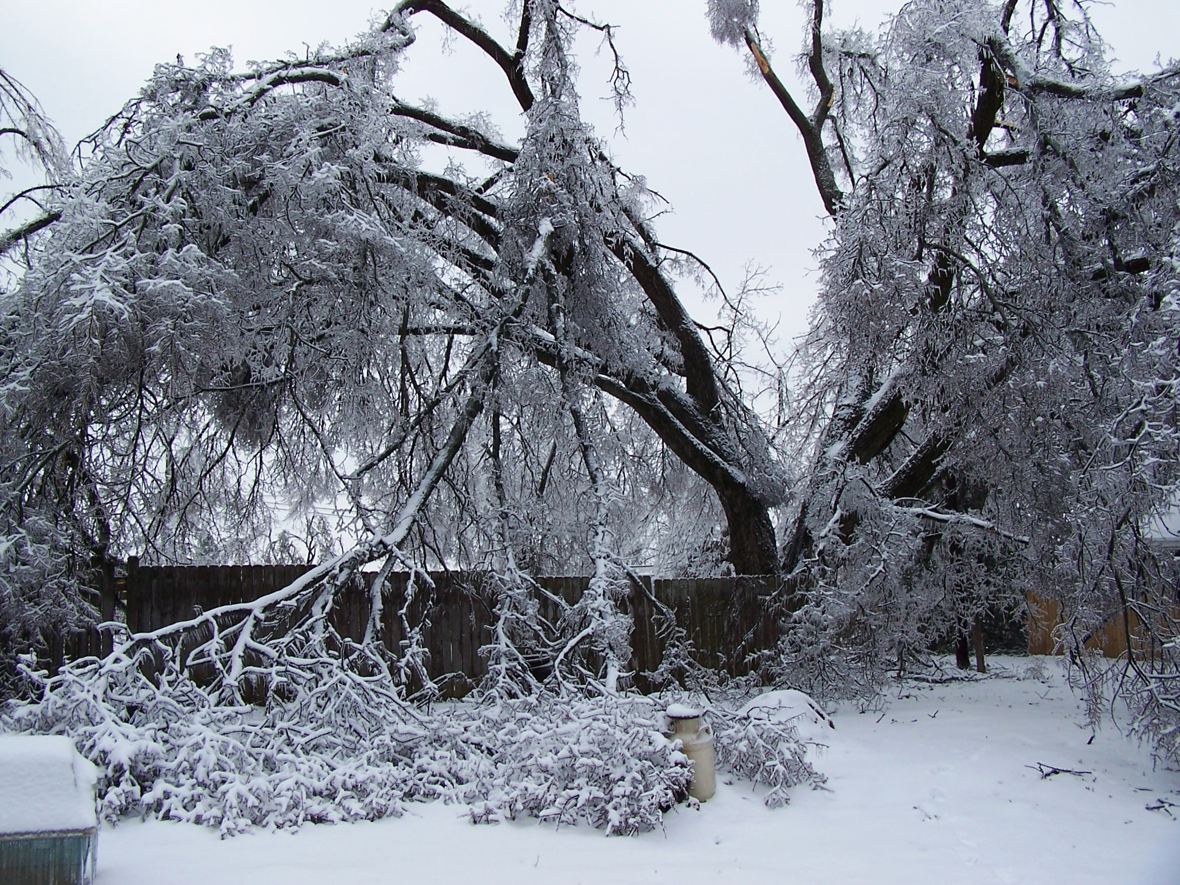 Winter Tree Hazard and Risk Inspections