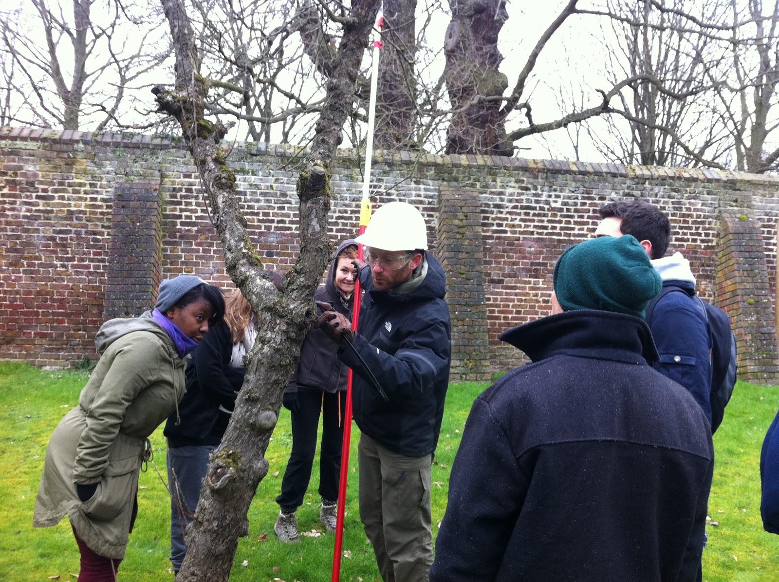 Winter Tree Inspection