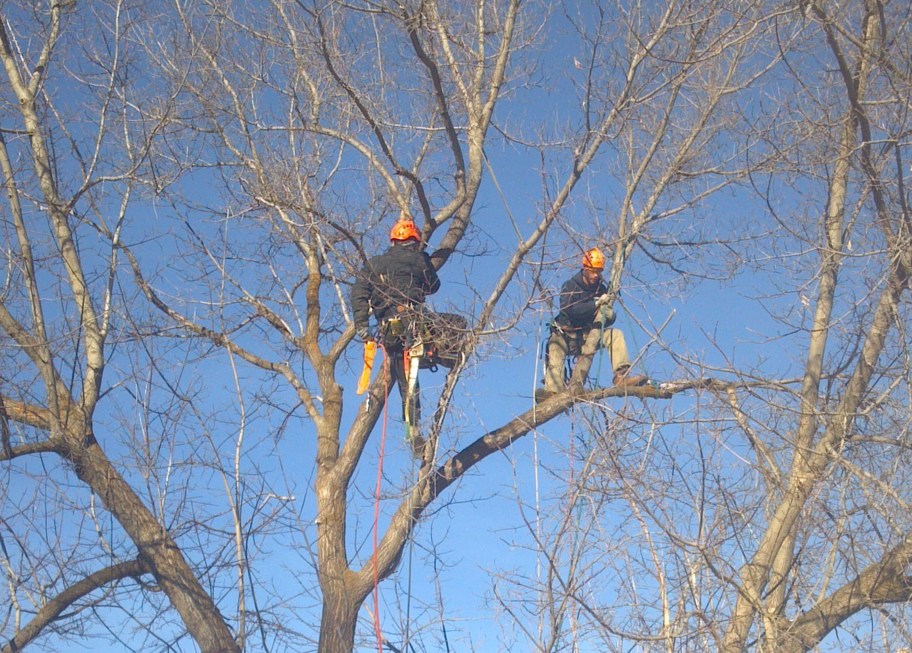 Winter Tree Pruning and Tree Removal Services