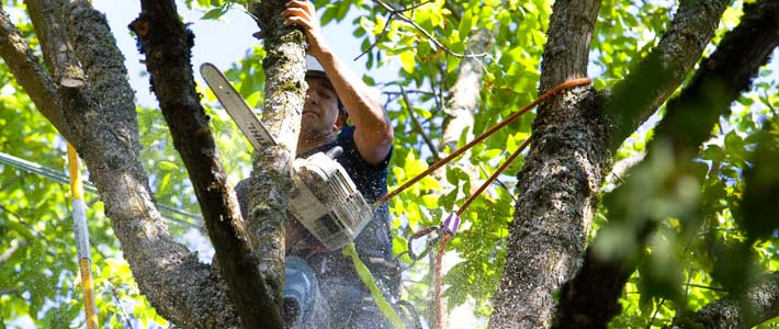 You Need to Remove Trees Which are Damaged by Insects or Disease