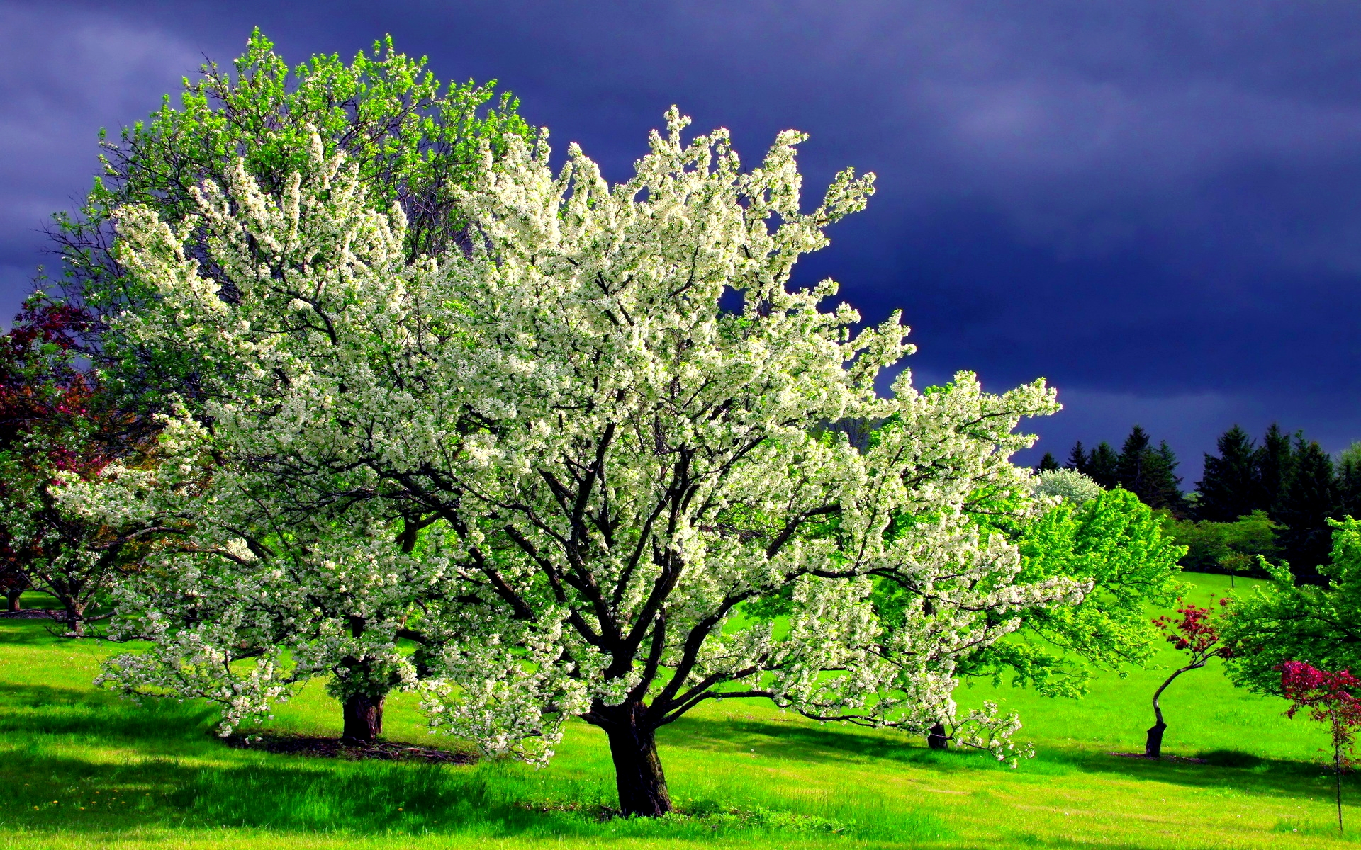 dream-spring-2012-spring-tree_1920x1200_96932