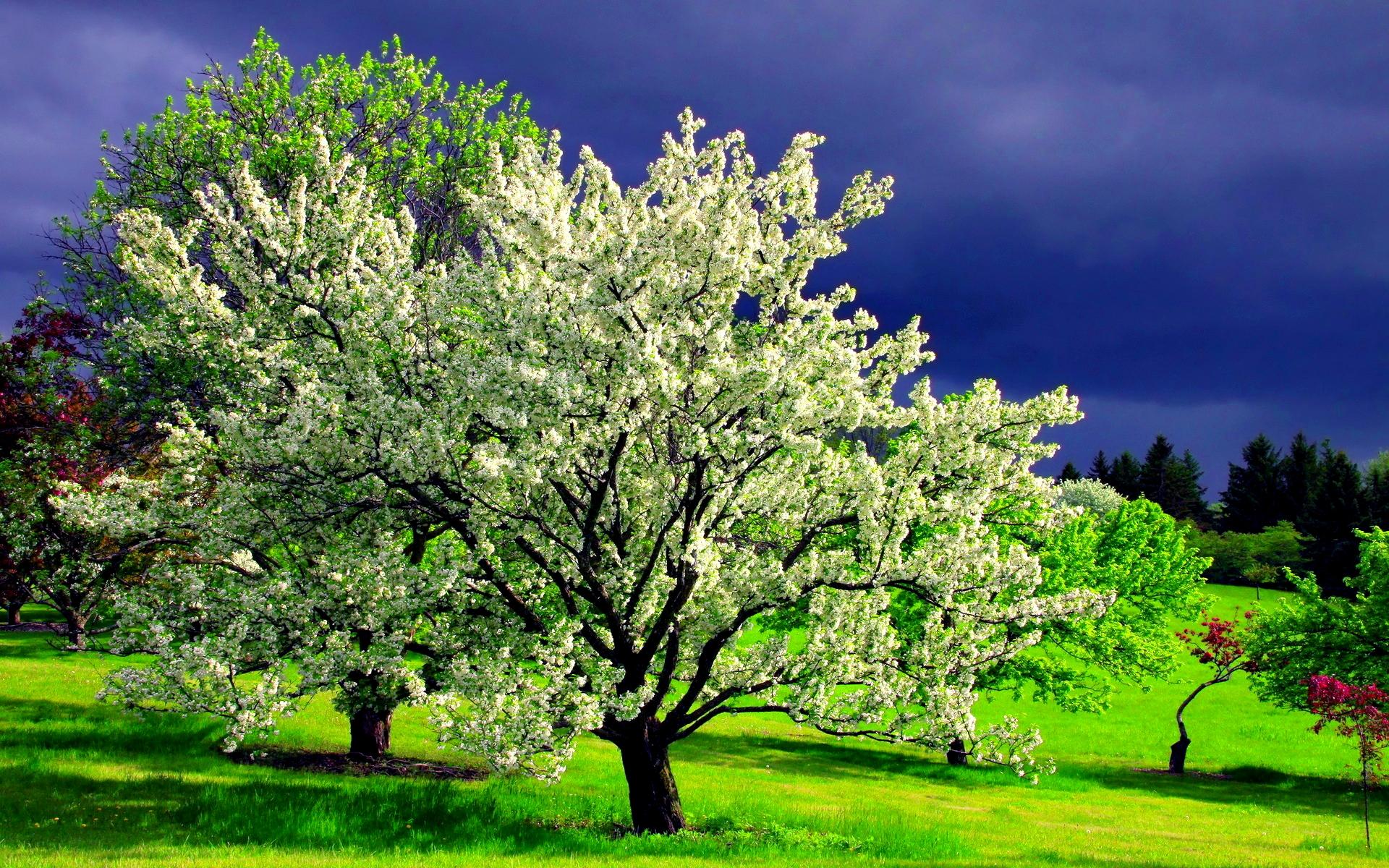 dream-spring-2012-spring-tree_1920x1200_96932