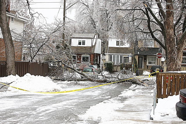tree care to prevent storm damage in Toronto