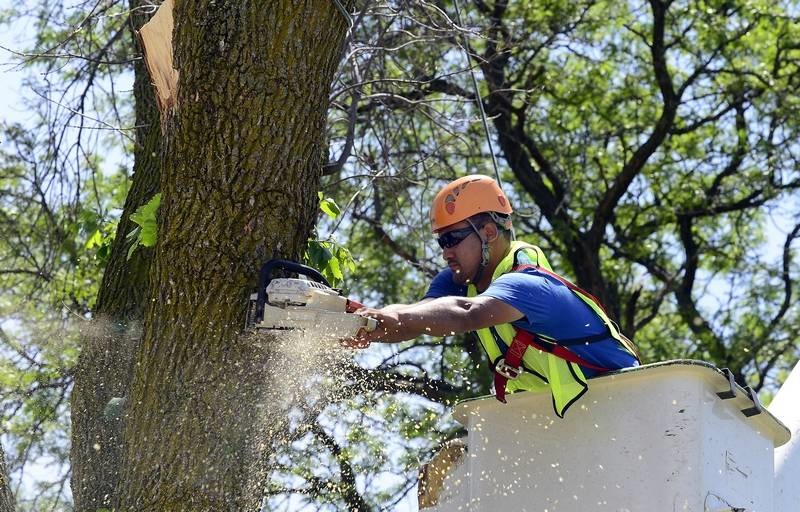 Removal Of An Ash Tree With a Bucket Truck