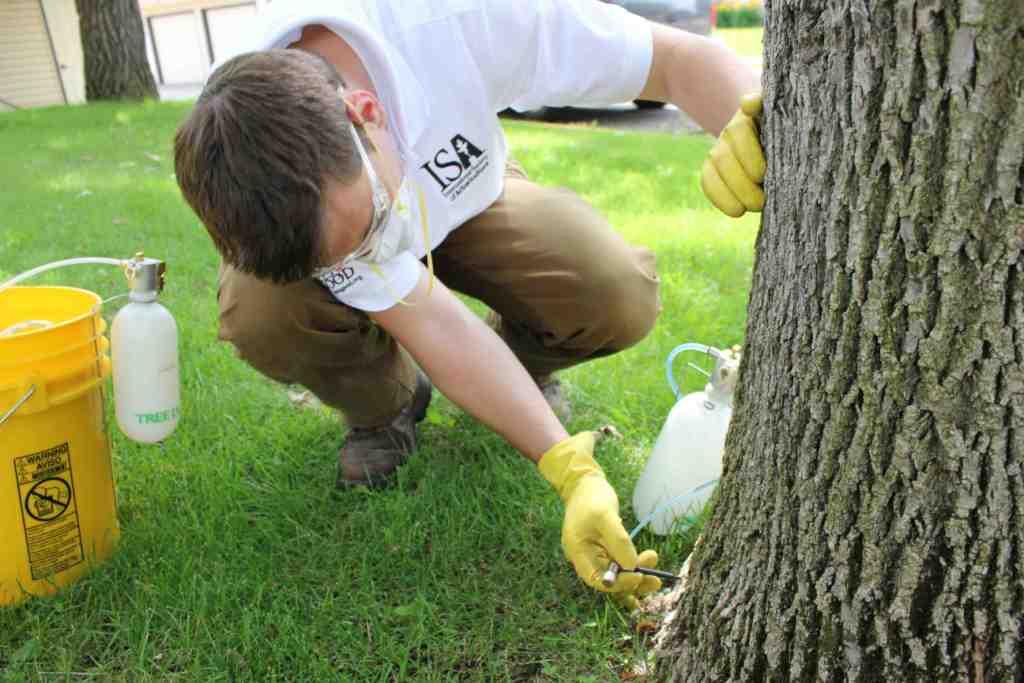 tree pest control