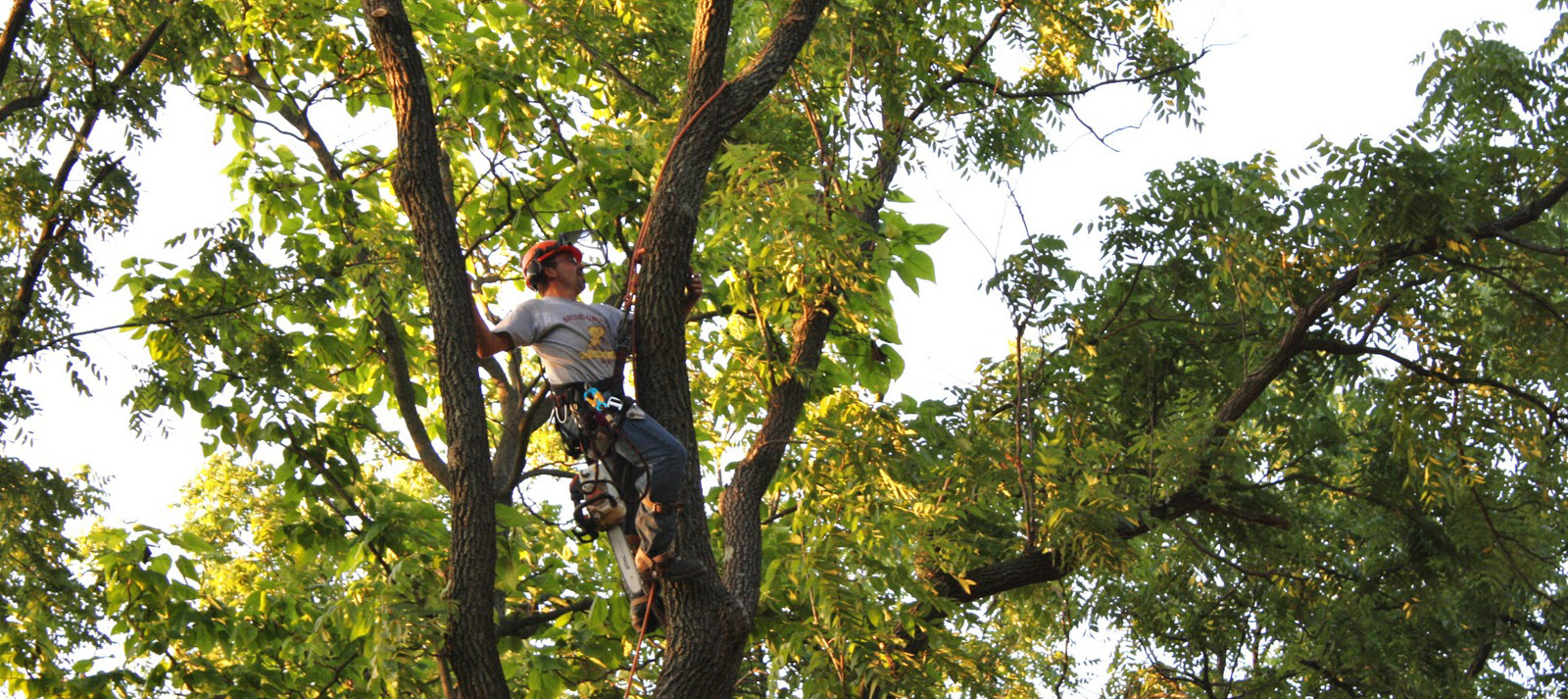 Tree Trimming Toronto
